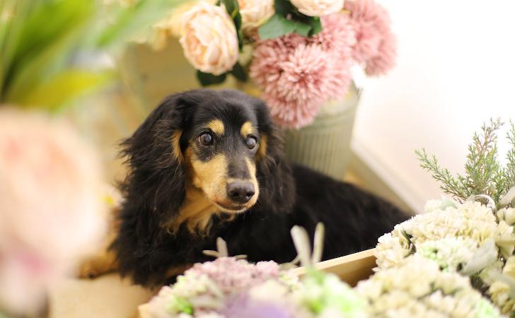 花に囲まれた犬